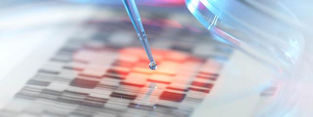 Bispecific Antibody